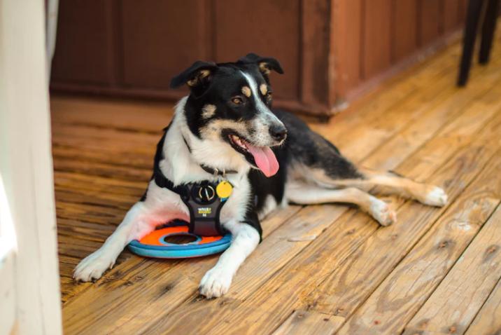 Internationale dag van de blindengeleidehond